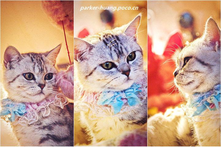 肥猫头像图片大全可爱