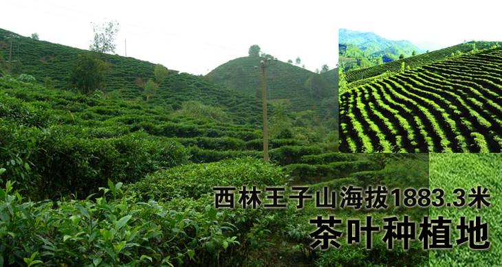 广西百色西林县驮娘江土特产有机银螺春绿茶王子山礼盒品装包邮