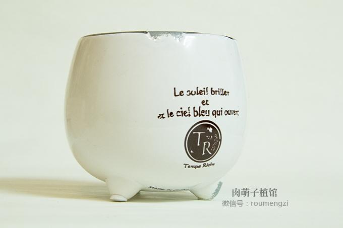 肉萌子 陶瓷多肉花盆 韩国手绘花盆陶瓷 生日礼物 组合盆栽 有孔