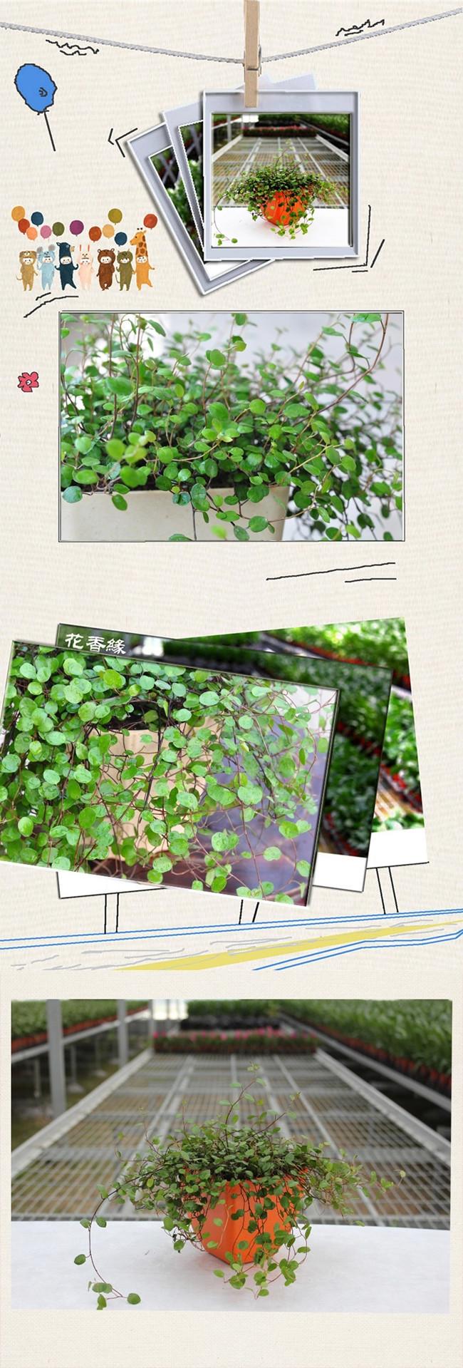 手绘绿植平面图