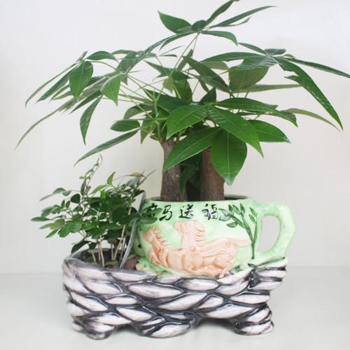 居家办公室桌面盆栽 迷你 绿植|吸甲醛防辐射|淡雅发财树