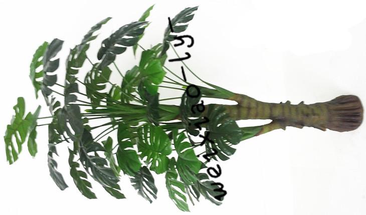龟背植物手绘图