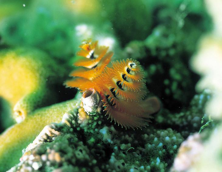 史地阅读:大洋洲和那里的动物们(一)