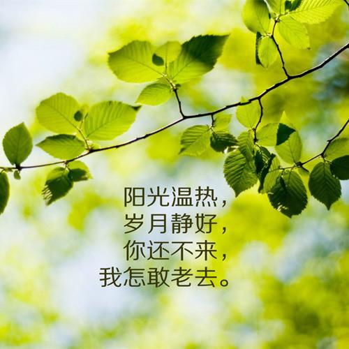 微信头像 绿叶阳光