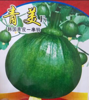 青美/韩国青皮一串铃南瓜种子/早熟