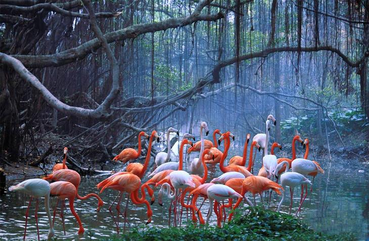 动物天堂,非洲肯尼亚野趣之旅