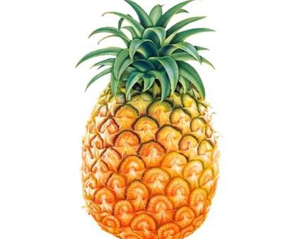幼儿园海绵纸手工水果菠萝