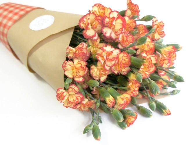 康乃馨多丁spray carnation