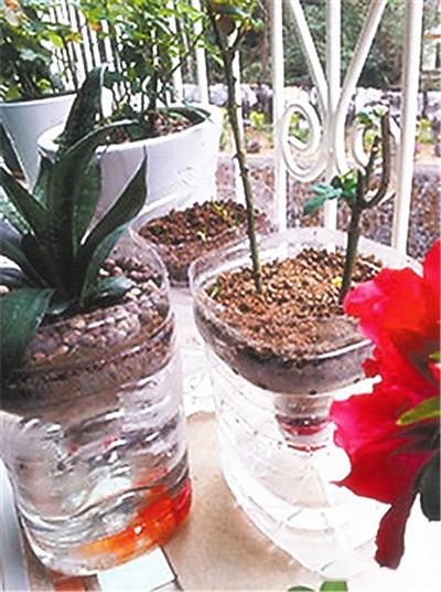 塑料瓶养花种菜这么爽,还买什么花盆!