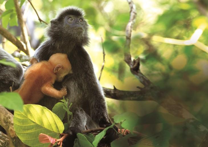 手绘雨林生物明信片