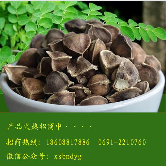 傣药谷厂家直销正品辣木籽中科院培养辣木子食用种植皆可免邮试吃