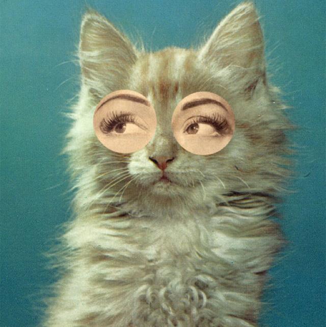 壁纸 动物 猫 猫咪 小猫 桌面 640_641