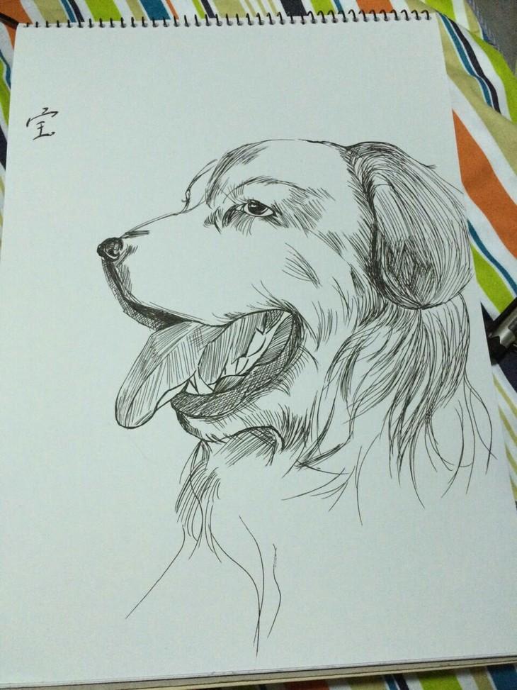 素描铅笔画天鹅