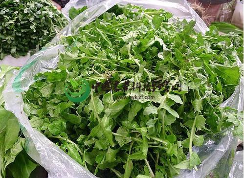 大叶荠菜种子 野生蔬菜 绿色养生蔬菜