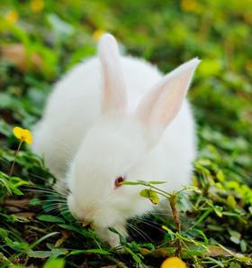 小白兔认养