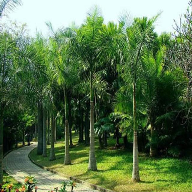 西双版纳——勐仑植物园