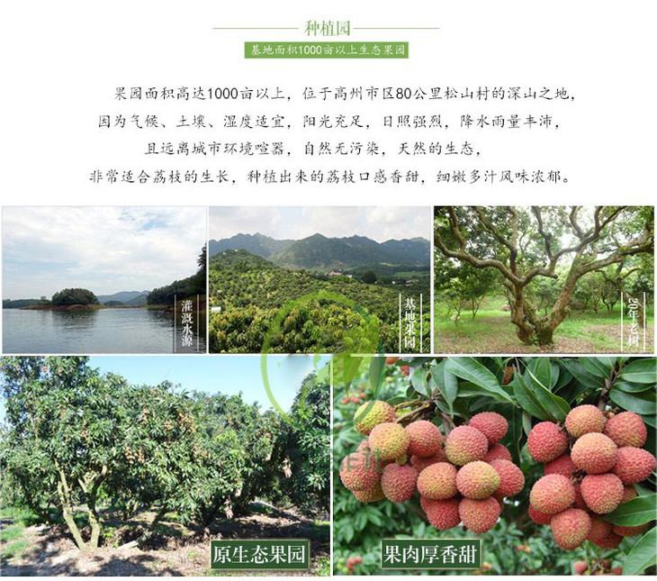 茂名高州特产荔枝桂味