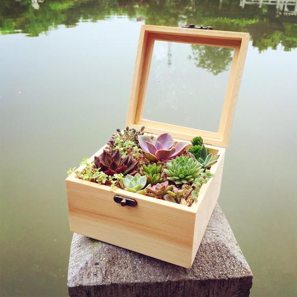 多肉植物礼盒生日情人节礼物 防辐射送女友 创意绿植小盆栽包邮