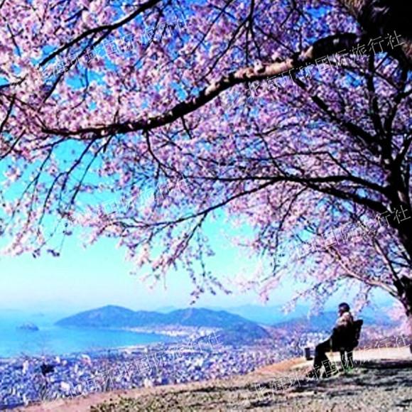 春天这里各种树木鲜花盛开,尤其是樱花特别漂亮.