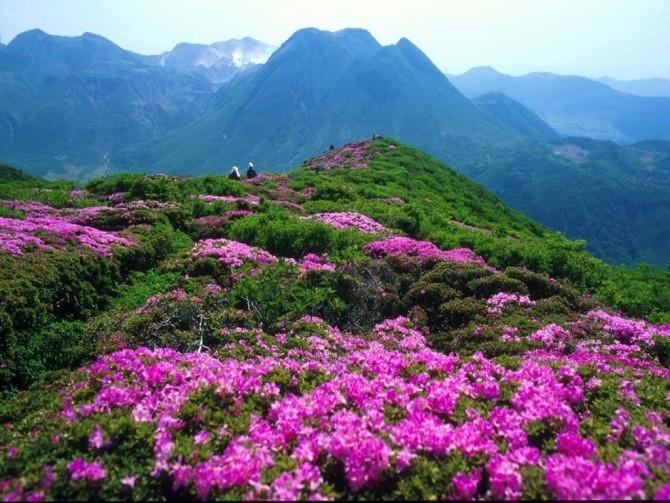 百里杜鹃风景区位于贵州省毕节地区大方,黔西县交界处,因整个天然