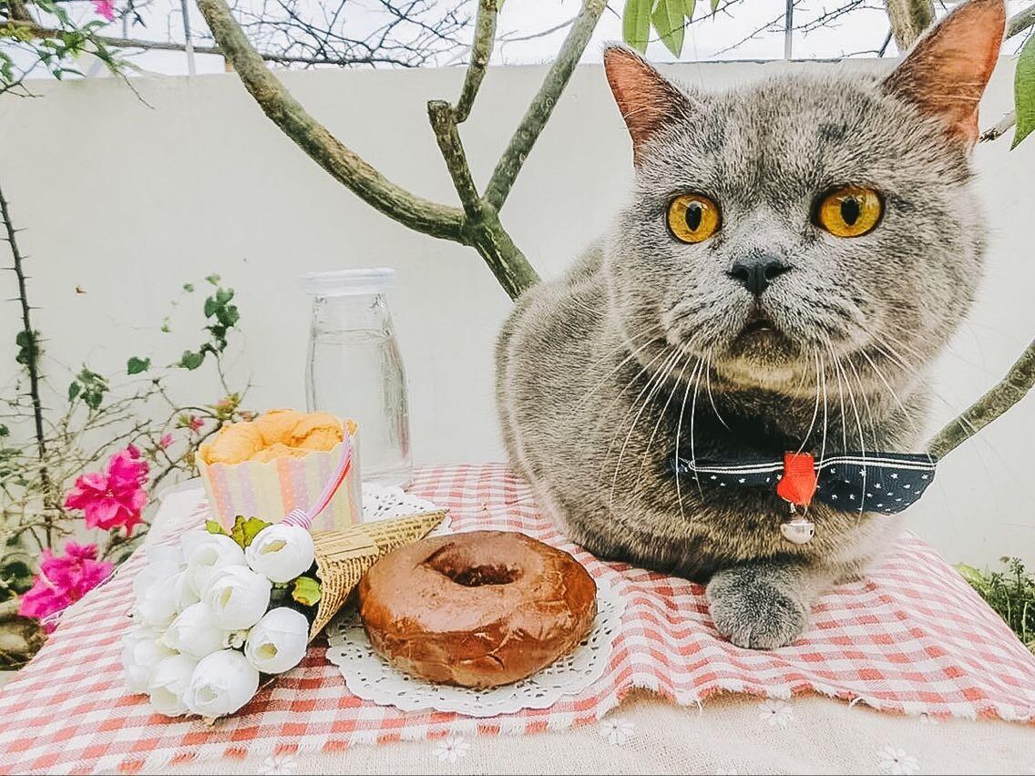 壁纸 动物 猫 猫咪 小猫 桌面 1136_852