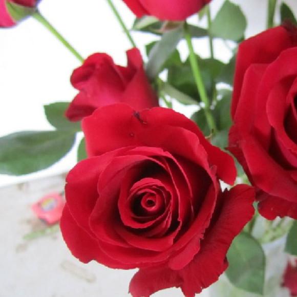 微信头像花朵唯美玫瑰