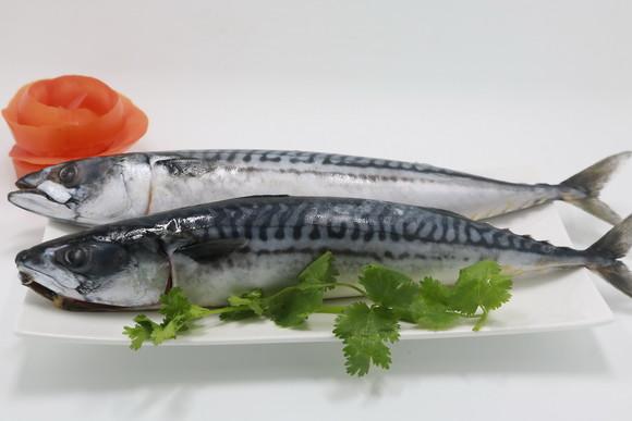 冰岛原装进口鲭鱼 新鲜冷冻 烧烤鱼 美味青花鱼1袋(2