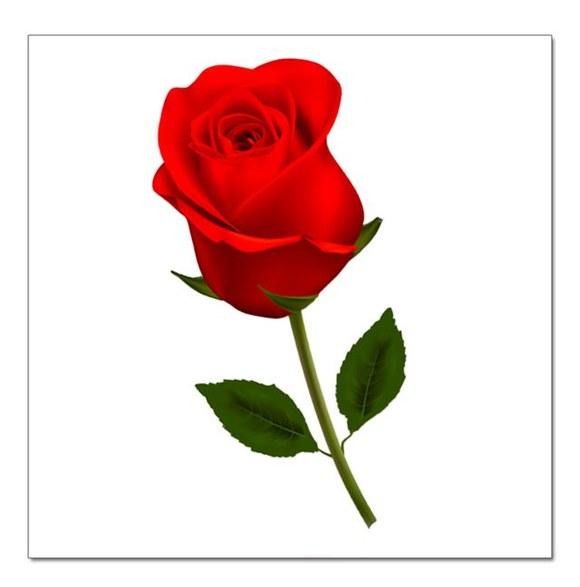 微信玫瑰风景图片
