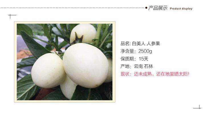 现摘现发 石林优级人参果 2500克 云南特产新鲜水果白