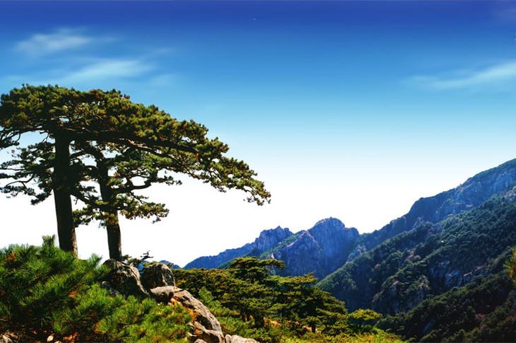 """莫问茶行,""""东桑西移"""" 黄山,中国5a级旅游景区,国家级风景名胜区,全国"""