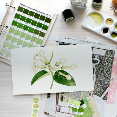{ 分享 } 笔下美好——森系水粉植物彩绘